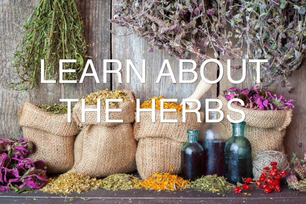 learn-about-herbs