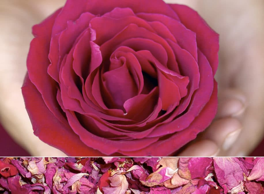 Herb of the Month: Rose Petals